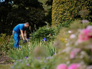 A competition is also taking place to win one year's membership at Dorothy Clive Gardens