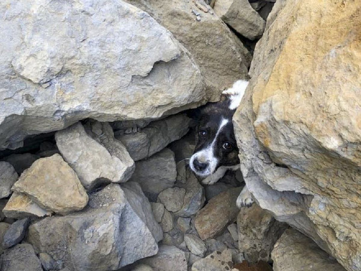 A Jack Russell trapped under rocks
