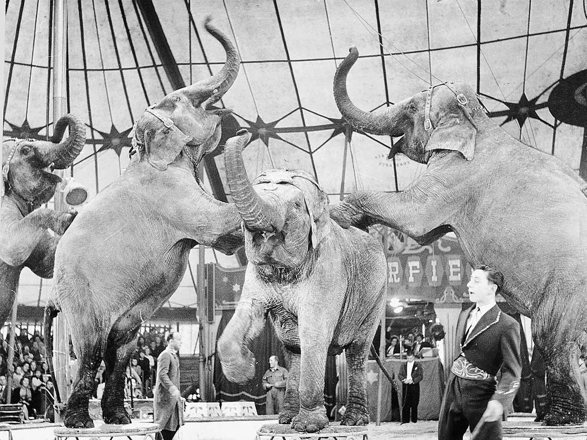 The old days – performing elephants at Chipperfield's circus in 1961
