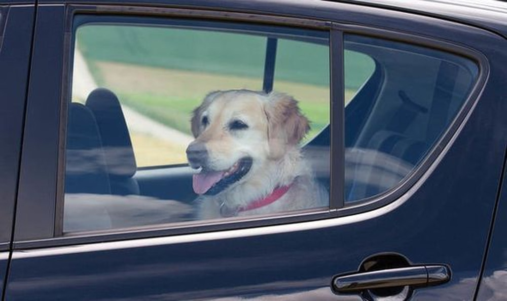 Number of dogs left in hot cars in Shropshire rises by 20