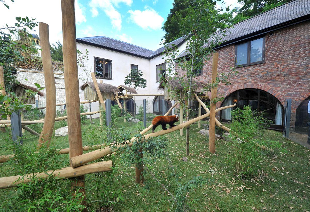 The new red panda enclosure at West Midland Safari Park