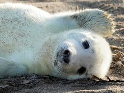 Farne Islands grey seal colony sees record breeding year