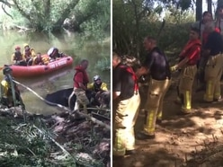 Two-hour rescue sees fire crews save cows stuck in River Severn