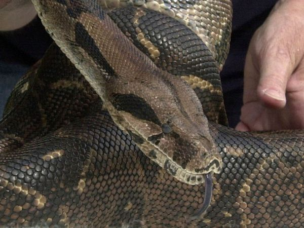 Crimestoppers received a call saying a snake had been released into The Dingle