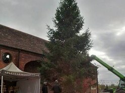 Apley installs the tallest Christmas tree in Shropshire