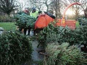 Trees collected will be turned into soil improver for local farmers and gardeners