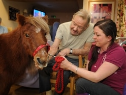 Taking the reins for ponies' visit to Shrewsbury care home - with video and pictures