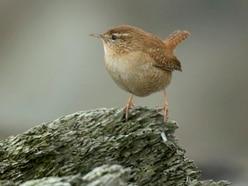 Big Garden Birdwatch: Warmer weather could boost tiny birds' survival chances