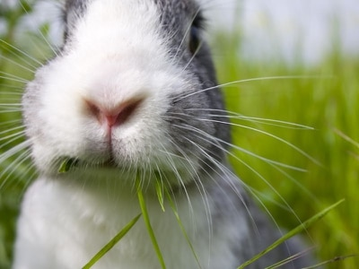 Please show respect and care for rabbits