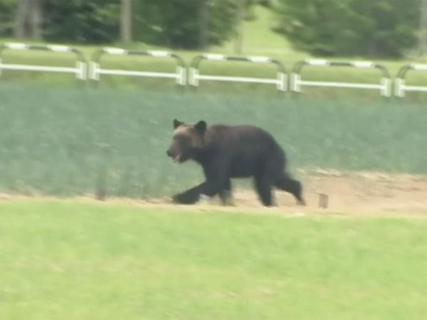 Bear on the loose in Japan