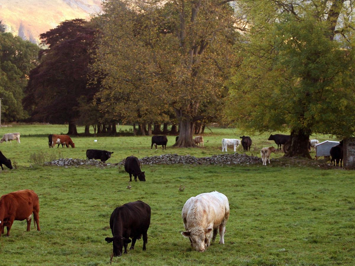 How you pronounce words such as 'farm' could change