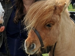 School looking forward to pony visit for mental health