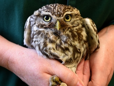 Police backing owl protection operation