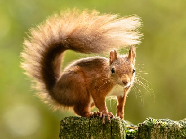 The Prince of Wales has thanked those working to protect red squirrels