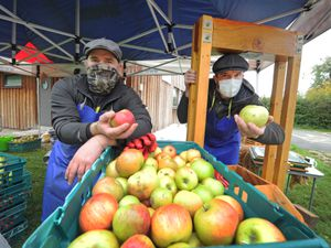 BORDER PIC  /  DAVID HAMILTON PIC / SHROPSHIRE STAR 17/10/20 Pressing apples, cider makers (left-right) Tim Barker and Joseph Anderson, at Canal Central, Maesbury Marsh, Oswestry..