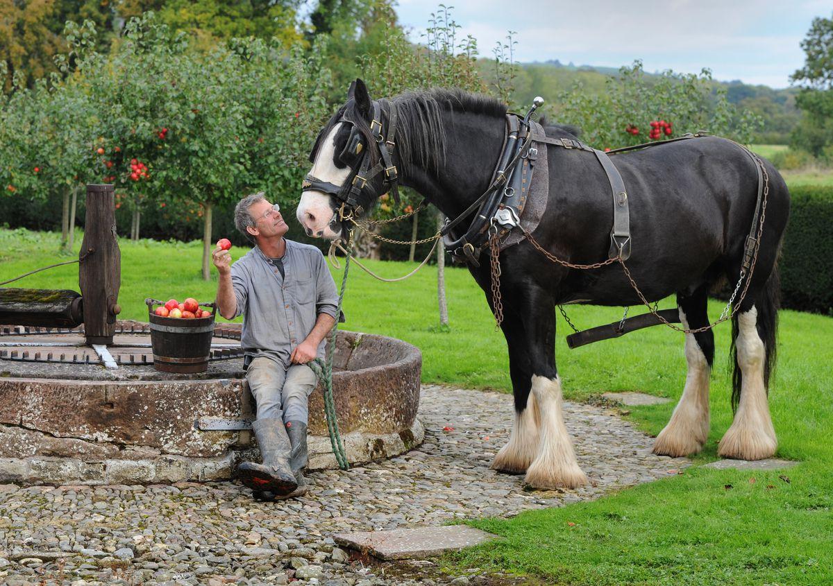 Simon Trueman with 'Alfie' next to the stone cider mill at Acott Scott Historic Working Farm