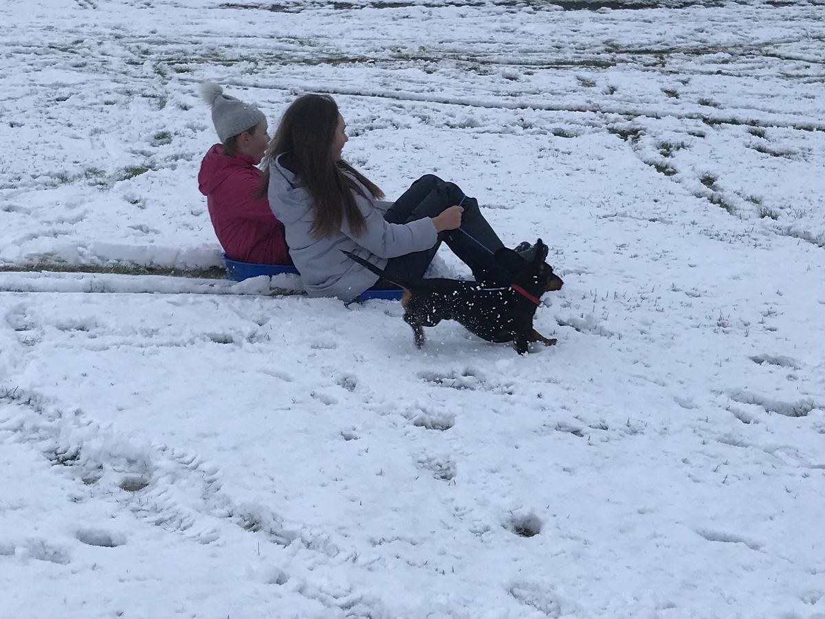 Evie and Maisie Darrall with dog Monty sledging in Horsehay, Telford. Pic: Nicola Oliver