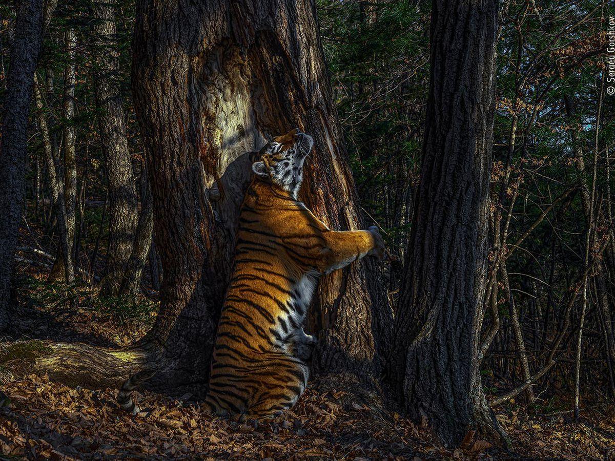 Sergey Gorshkov Named 2020 Wildlife Photographer Of The Year