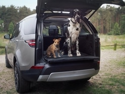 These are the best cars for dog owners