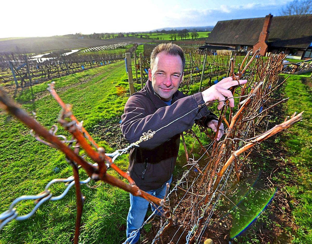 Heard it on the grapevine – Clive Vickers at Halfpenny Green Wine Estate