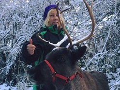 Social media saves Raziel the reindeer in time for Christmas