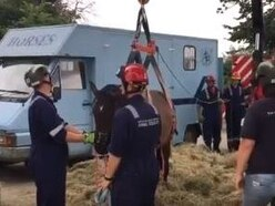 A horse named Moo: Fire crews rescue trapped animal near Shrewsbury - with video