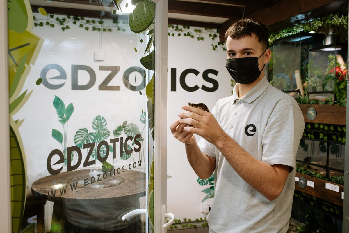 Ed Scott, 18, from Telford has set up his own exotic pet shop in Oakengates called Edzotics.