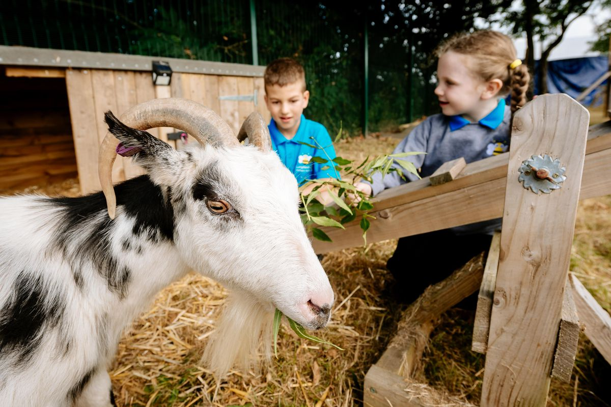 Longlands Community Primary School in Market Drayton have introduced two goats in their school garden, one called Leo (Leonardo DiCapri-Goat) and Vince (Vincent Van Goat)
