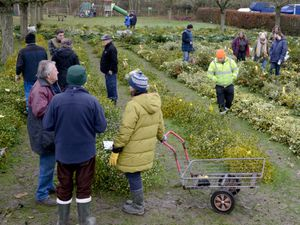 The annual sale of mistletoe, held at Burford, near Tenbury Wells, usually pulls in scores of visitors