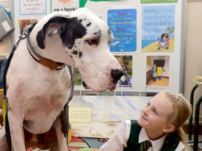 It's bark to school for reading dog Hector
