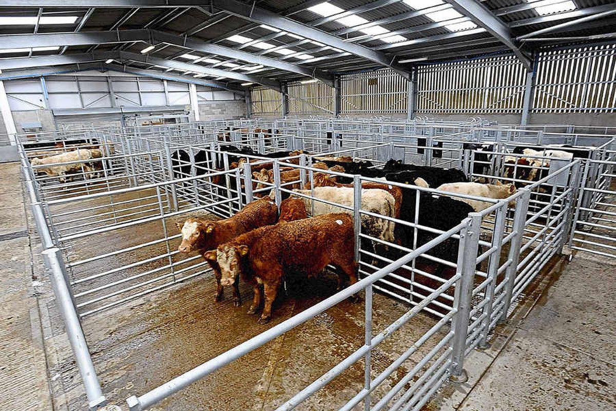 New-look Oswestry market is impressing farmers