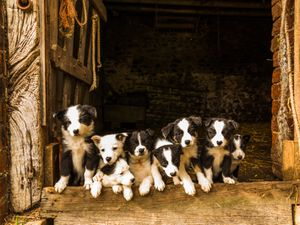 Pups pose for picture on Shropshire farm