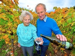Pattingham grape-picker Ann still reaping harvest at 97