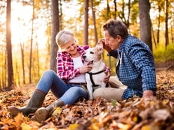 Top dog-friendly attractions in the Midlands and Shropshire
