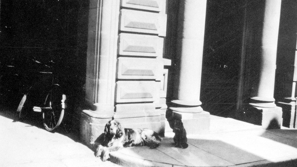 Looking for a lead... Prince, the dog of Teddy Talbot, outside the old Shrewsbury Borough Police Station, at Swan Hill, Shrewsbury. Teddy Talbot was a policeman who lived in a flat on the first floor with his wife. His full name was Edward Talbot. Date of this picture is unknown, but perhaps 1930s. This photo came originally from Teddy's nephew, Phil Bennett, of Shrewsbury, who was born at Copthorne Barracks.