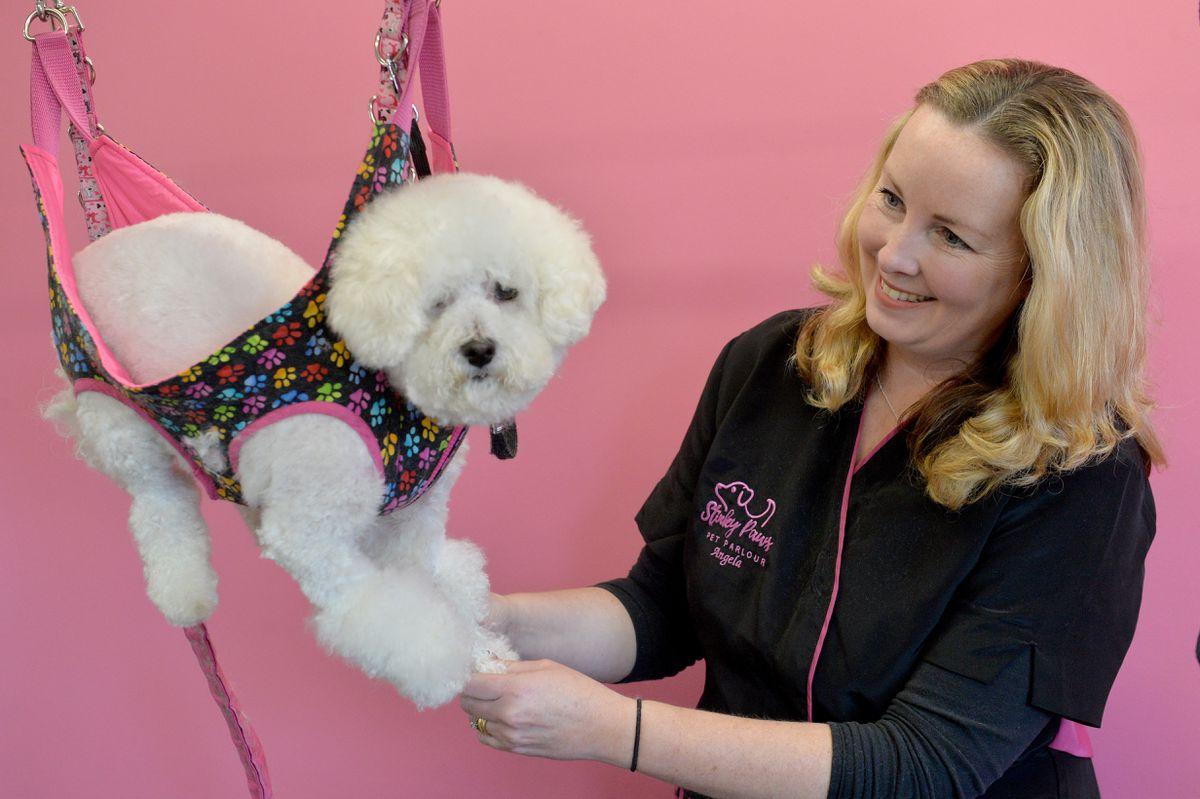 Dog groomer Angela Warrington grooms rescue dog Lola in a calming cradle