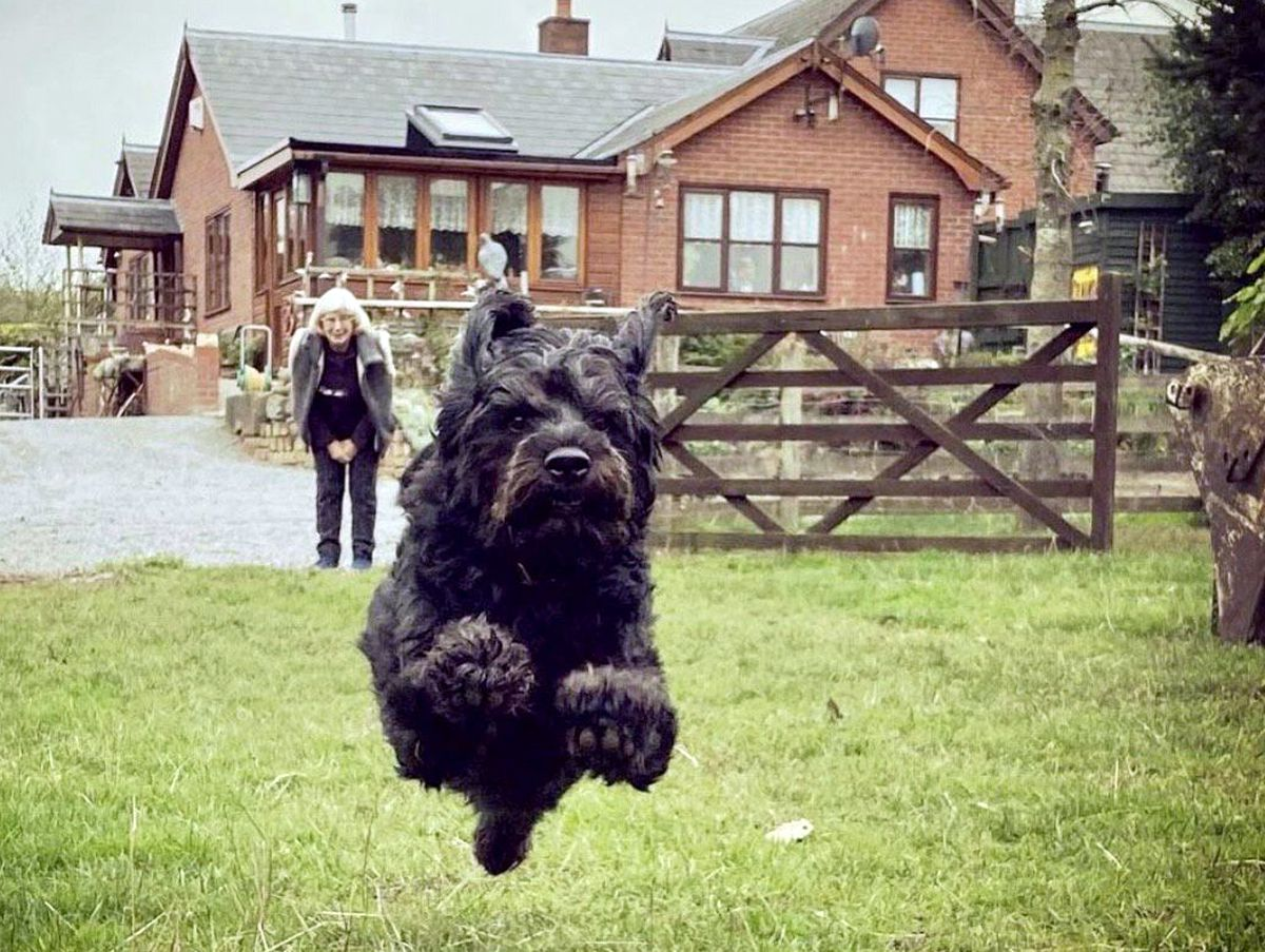 A giant leap for dog kind by Rummy.