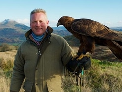 Golden eagles to be reintroduced at Snowdonia despite worries from farmers