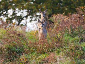 Hello again, deer (Photo: John Hayward)