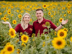 Amelia Davies and Simon Davies at Little Wytheford Farm near Shrewsbury have for the second year opened their gates to their Sunflower Farm after the huge success from last year