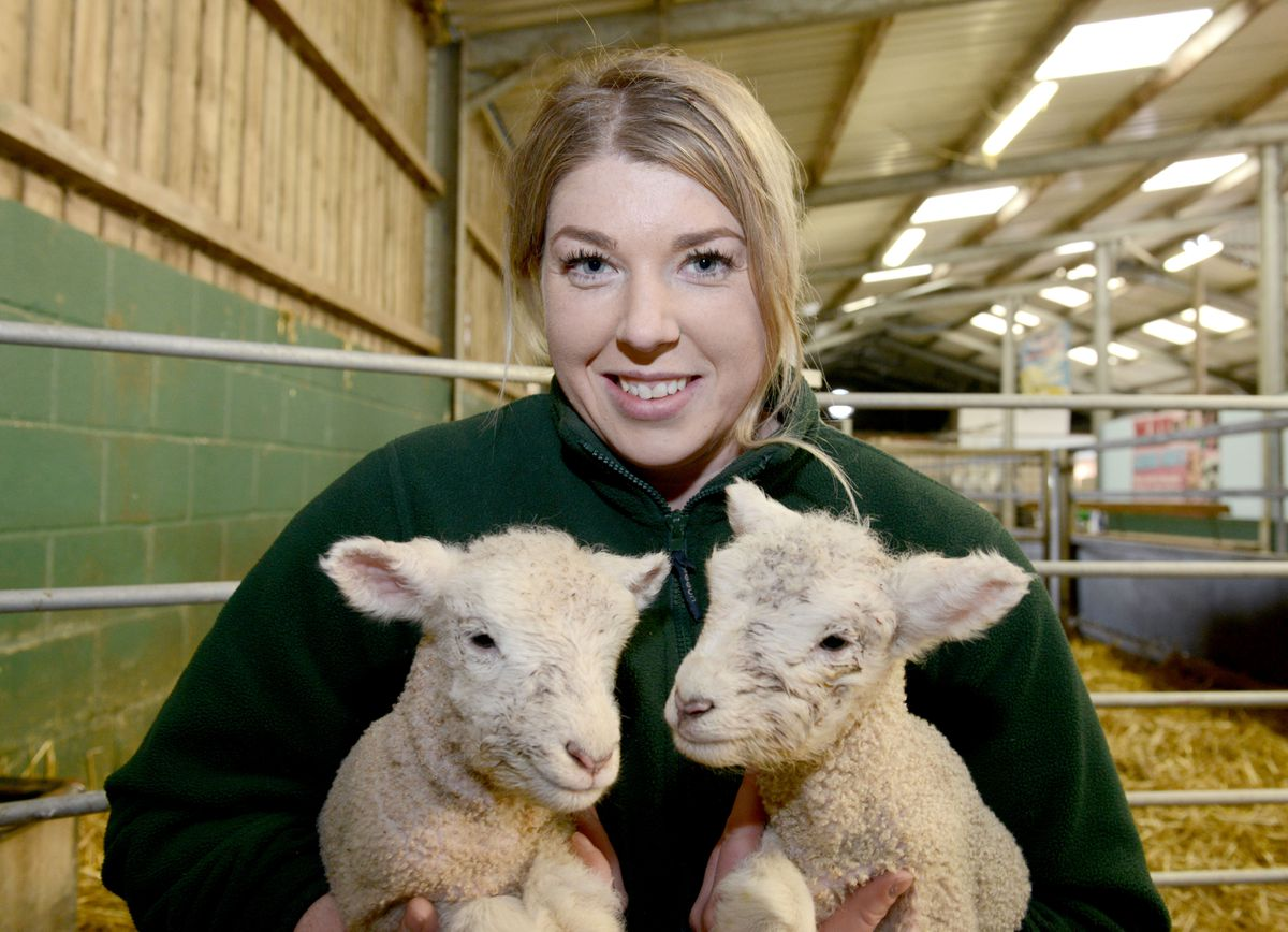 Lucy Jones cuddling lambs at Park Hall, Oswestry