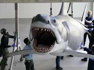 A replica of Bruce, the shark featured in Steven Spielberg's classic 1975 film Jaws, is lifted into a suspended position for display at the new Academy of Museum of Motion Pictures (Chris Pizzello/AP)