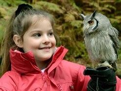 Halloween hoot: Owls part of spooky fun at Hawkstone Follies