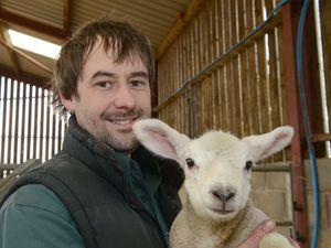 SHROPSHIRE STAR ( JOHN SAMBROOKS  23/03/2019  Ben Hollins with one of the lambs at Fordhall Organic Farm, Market Drayton.