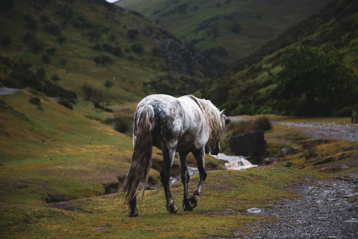 JRR Tolkien, by Alfie Blue, shows a horse on the Long Mynd