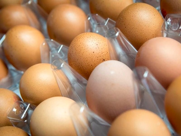 Controversial Market Drayton egg farm plans could be approved next week