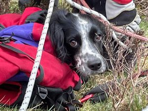 Louis the Springer Spaniel was not injured (Handout/PA))