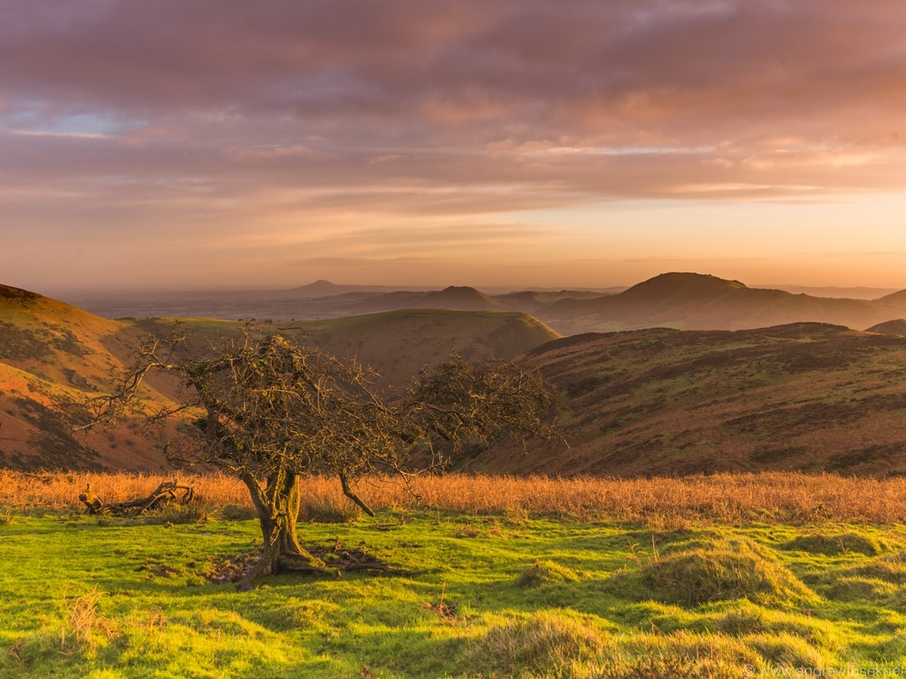 Shropshire photographer captures beauty and the best of nature's wonders