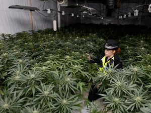 Police in a raided cannabis farm in the West Midlands