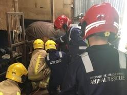 Horse stuck on gate rescued by fire crews near Bridgnorth